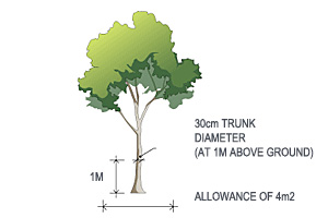Large tree with 30cm trunk diameter at 1 metre above the ground and a ground area of 4m²